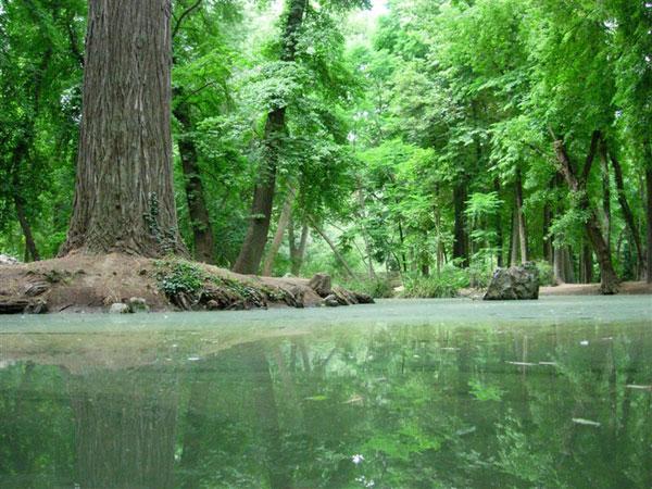 C mo se formaron los bosques for Importancia de los viveros forestales